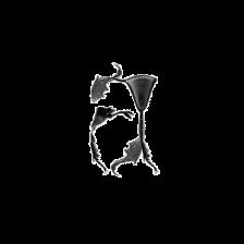 Artypodia